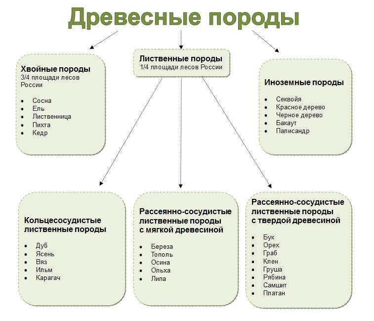 Характеристики хвойных пород