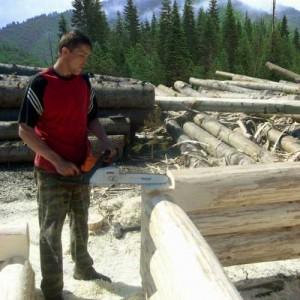 фото: древесина осины