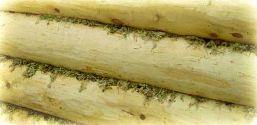 фото: мох для конопатки бани