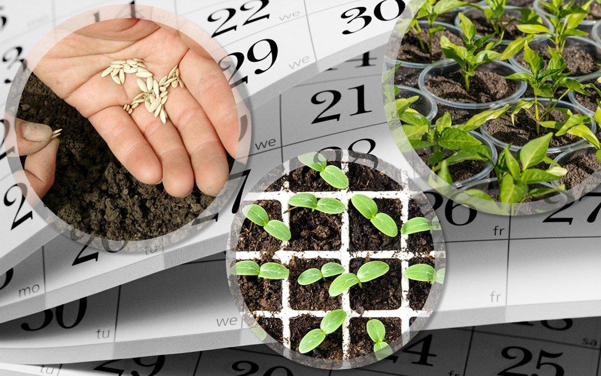 Подготовка к новому дачному сезону, закупка семян и саженцев