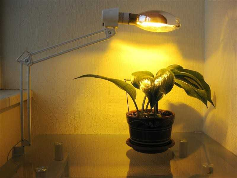 Подсветка растений фотолампами днат