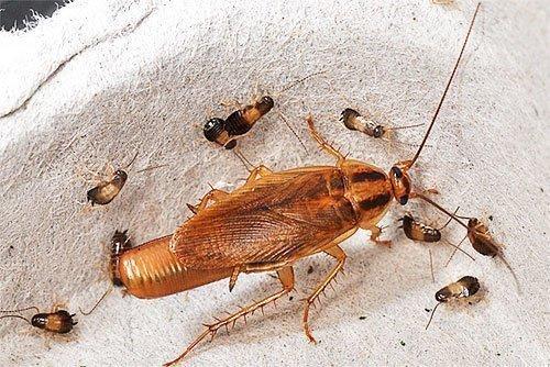 Эффективная и безопасная обработка жилья от паразитирующих насекомых