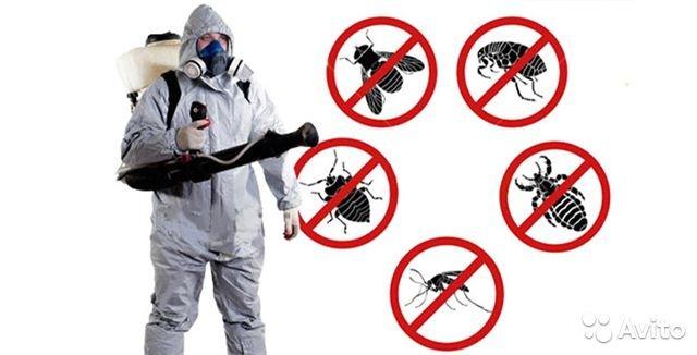 Что делать с насекомыми в доме и на участке